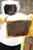 Bee keeper is checking. A beeswax with bees royalty free stock photo
