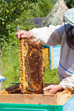 Bee-keeper holds in hand a frame with honey. Honeycombs and bees stock photo