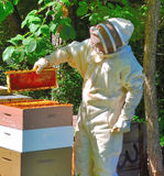 Bee keeper. A bee keeper looks at his colonies' production in a beekeepers suit Royalty Free Stock Photo