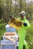 Bee-keeper with a honeycomb. Bee-keeper in a protective suit in an apiary stock images
