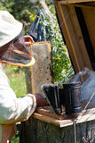 Bee-keeper smokes bees from a beehive a smoke by means. Of bee smoker Royalty Free Stock Photos