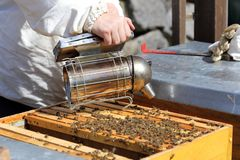 Bee- keeper is smoking. On a bee hive royalty free stock photo