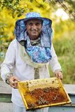 Bee-keeper takes out of the beehive or apiary the frame for bees. A male bee-keeper takes out of the beehive or apiary the frame for bees royalty free stock image