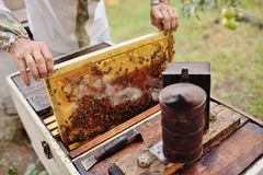 Bee-keeper takes out of the beehive or apiary the frame for bees. A male bee-keeper takes out of the beehive or apiary the frame for bees royalty free stock photo