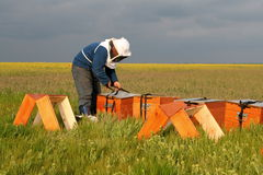 Bee keeper at work Royalty Free Stock Photos
