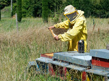 Bee-keeper at work - checking hives. Smoker to han. Traditional animal husbandry, keeping bees royalty free stock images