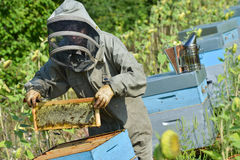 Bee Keeper Working with Bee Hives in a sunflower field Stock Photography