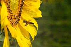 Bee Keeper Royalty Free Stock Photo