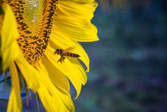 Bee Keeper Royalty Free Stock Photography