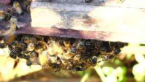 Bee-keeping at Binh Phuoc province, Vietnam. Bees Farm, Zoom in bees at their honey super slow motion, Bee-keeping at Binh Phuoc province, Vietnam. Agriculture stock footage