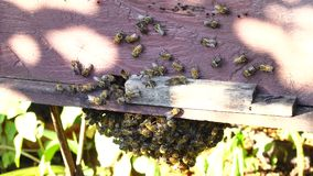 Bee-keeping at Binh Phuoc province, Vietnam. Bees at their honey super, Bee-keeping at Binh Phuoc province, Vietnam. Agriculture in Binh Phuoc province is stock video footage