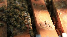 Bee-keeping at Binh Phuoc province, Vietnam. Zoom in bees at their honey super slow motion, Bee-keeping at Binh Phuoc province, Vietnam. Agriculture in Binh stock footage