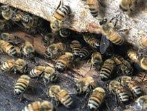 Bee Box and bees royalty free stock photo