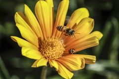 Bee and Lady Bug Royalty Free Stock Photos