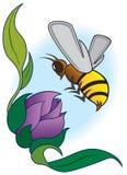 Bee Landing Stock Image