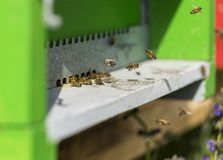 Bee landing on hive royalty free stock image