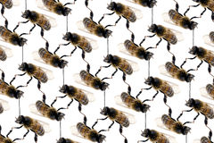 Bee line pattern on white background Stock Images