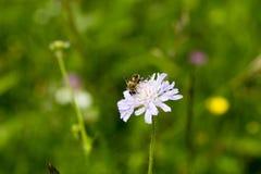 Bee. Macin Mountains National Park Romania, lanndscape Royalty Free Stock Photography