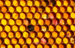Bee mosaic Royalty Free Stock Image