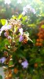Bee stock image
