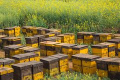Bee nests on a flower garden. Bee nests on a flower garden in China Royalty Free Stock Photo