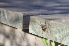 Bee over wood Royalty Free Stock Photo