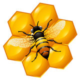 Bee on a part of honeycomb. Isolated on white. Also can be used as an icon Stock Photo