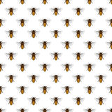 Bee pattern Royalty Free Stock Image