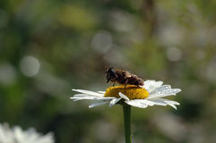 Bee perched on flower stock images