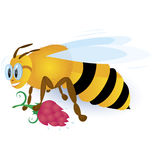 Bee with pink flower Royalty Free Stock Images
