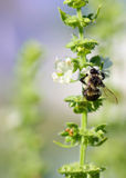 Bee on a plant Stock Photography