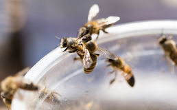Bee on a plastic cup. close. A photo stock photos