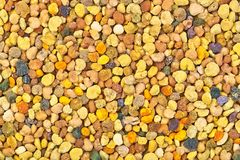 Bee pollen close-up. Multicolored natural honeybee pollen close-up image Royalty Free Stock Images