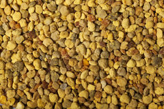Bee pollen closeup Stock Photography