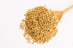Bee pollen closeup. On white background royalty free stock photos