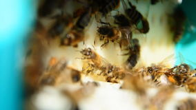 Bee with pollen, collecting pollen stock footage