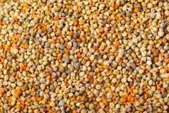 Bee pollen grain background Stock Image