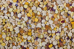 Bee pollen granules Stock Images