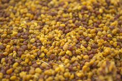 Bee pollen. Macro photo of bee pollen Stock Photography