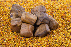 Bee pollen and propolis. Background for design Royalty Free Stock Images