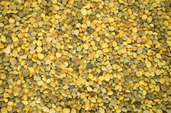 Bee pollen seeds Royalty Free Stock Image