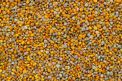 Bee pollen texture . Royalty Free Stock Photography