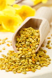 Bee pollen in wooden scoop, yellow flowers Stock Images