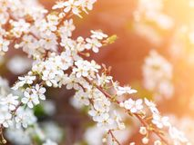 Bee pollinates flowers stock images