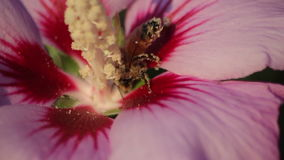 Bee pollinating bright flower. Video of bee pollinating bright flower stock footage