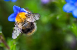 Bee pollinating a flower stock photo