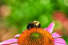Bee and pollination Stock Images
