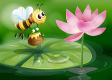 A bee with a pot of honey above a waterlily Royalty Free Stock Image