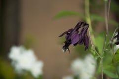 Bee. In purple flower stock photos
