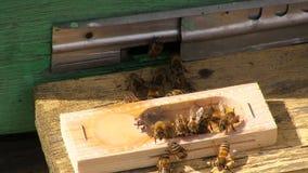 The bee-queen. stock footage